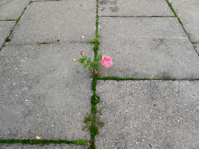 perierga.gr - Λουλουδάκια φυτρώνουν στο τσιμέντο!