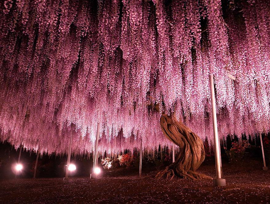 perierga.gr - Τα πιο εντυπωσιακά δέντρα στον κόσμο!