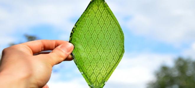 perierga.gr - Τεχνητό φύλλο παράγει οξυγόνο!