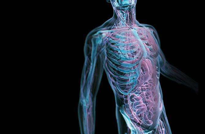perierga.gr - Επιστήμονες βρήκαν τρόπο να κάνουν το σώμα... διαφανές!