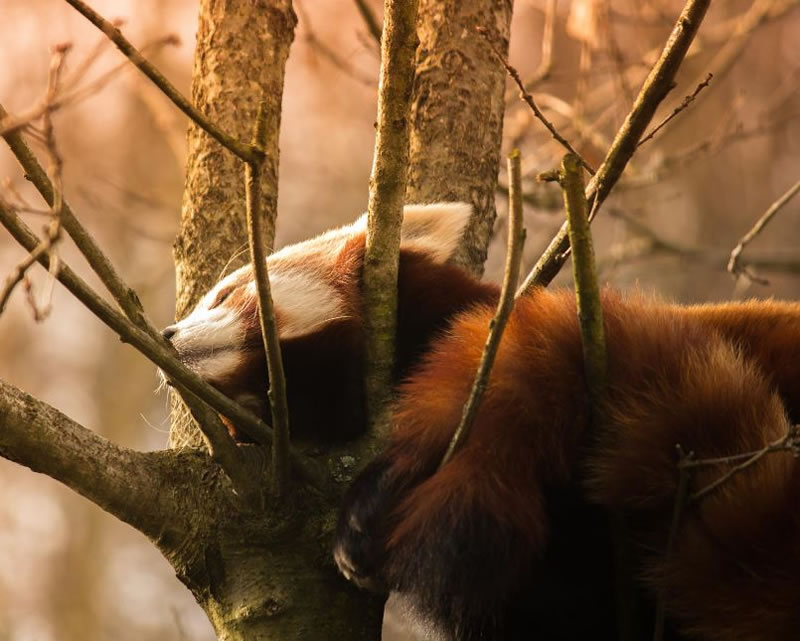 perierga.gr - Γλυκύτατα ζώα στην αγκαλιά του Μορφέα!