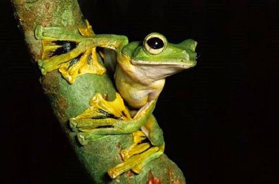 perierga.gr - 10 ζώα με πολύ παράξενα χαρακτηριστικά στο σώμα τους!