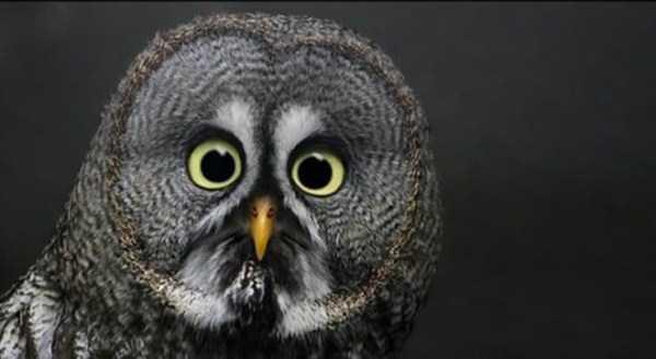 perierga.gr - Ζώα με την… έκπληξη ζωγραφισμένη στα μάτια!
