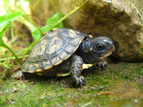 perierga.gr - Οι μαμάδες χελώνες μιλούν στα μικρά τους