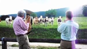 perierga.gr - Οι αγελάδες ακούνε... τζαζ! (βίντεο)
