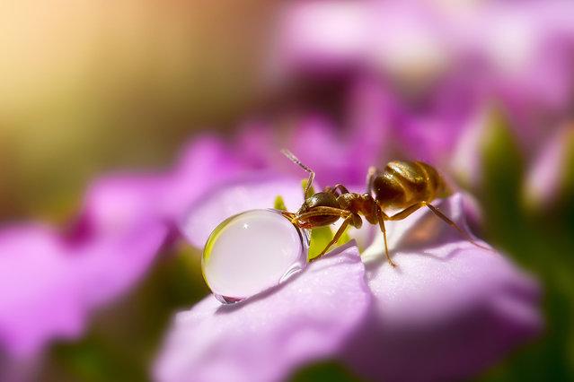 Οι περιπέτειες των μυρμηγκιών!