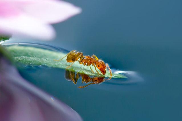 perierga.gr - Οι περιπέτειες των μυρμηγκιών!