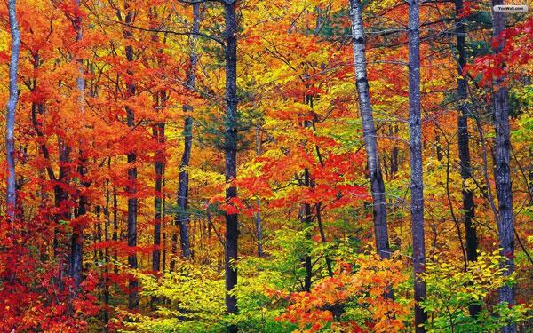 tilestwra.gr - Πανέμορφες φθινοπωρινές εικόνες
