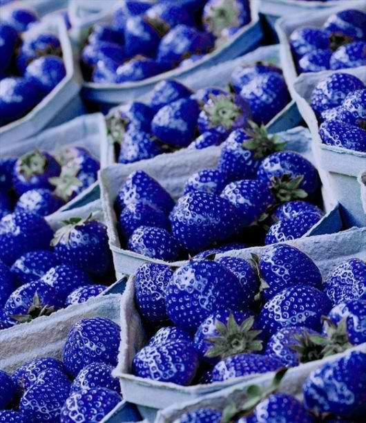 perierga.gr - Μπλε φράουλες που διατηρούνται περισσότερο!