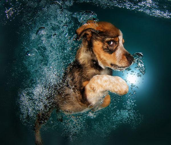 perierga.gr - Παιχνιδιάρικα κουτάβια κάτω από το νερό!