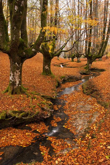 tilestwra.gr - Μυστηριώδες δάσος στην Ισπανία!