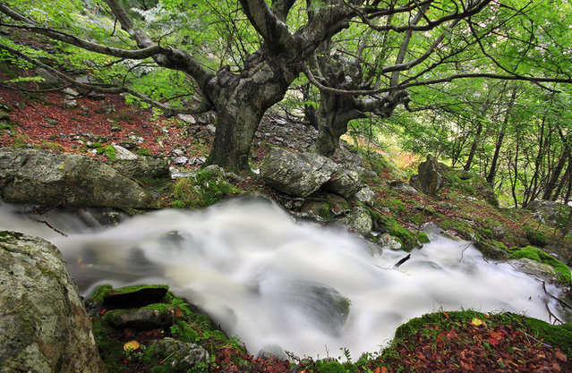 perierga.gr - Μυστηριώδες δάσος στην Ισπανία!