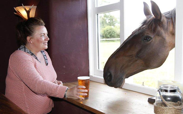 perierga.gr - Άλογο πίνει μπύρες σε παμπ!