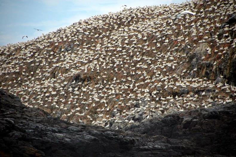 perierga.gr - Το νησί των πελαργών!