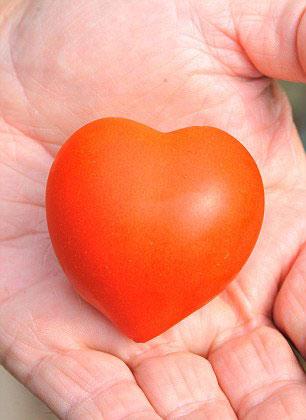 perierga.gr - Ντοματούλες σε σχήμα καρδιάς!