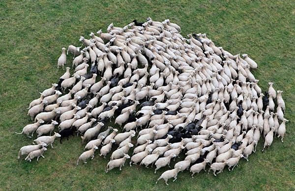 perierga.gr - Πρόβατα στη φύση συνθέτουν όμορφες εικόνες!