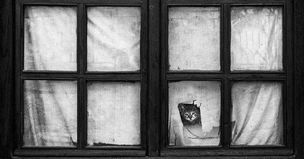 perierga.gr - Ζώα κοιτάζουν μέσα από το παράθυρο