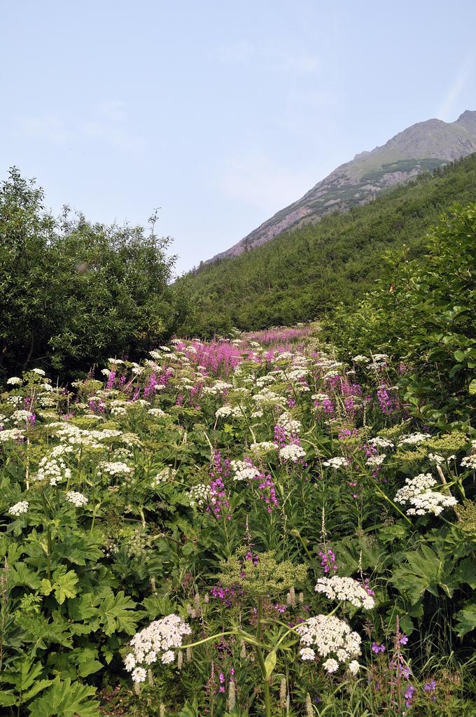 perierga.gr - Το καλοκαίρι στην Αλάσκα είναι μοναδικό!