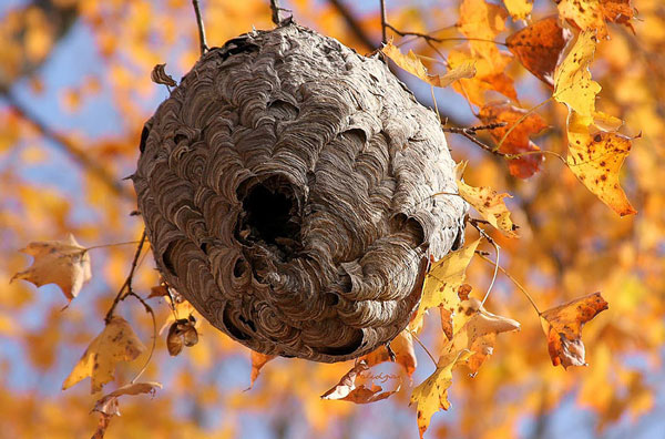 perierga.gr - Αρχιτέκτονες στη φύση εντυπωσιάζουν με τις φωλιές τους!
