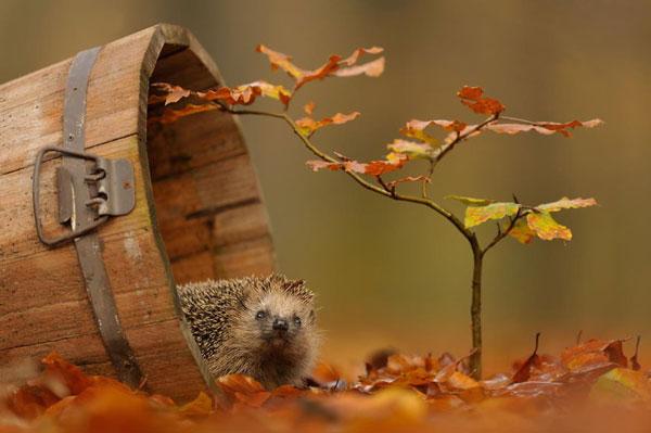 perierga.gr - Γλυκά ζωάκια απολαμβάνουν το φθινόπωρο!