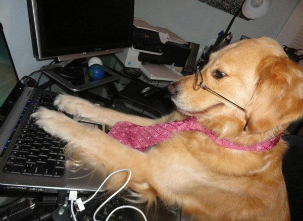 perierga.gr - Σκυλιά παίρνουν τη θέση των ανθρώπων!