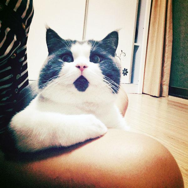 perierga.gr - Απίθανη γάτα... είναι μονίμως έκπληκτη!