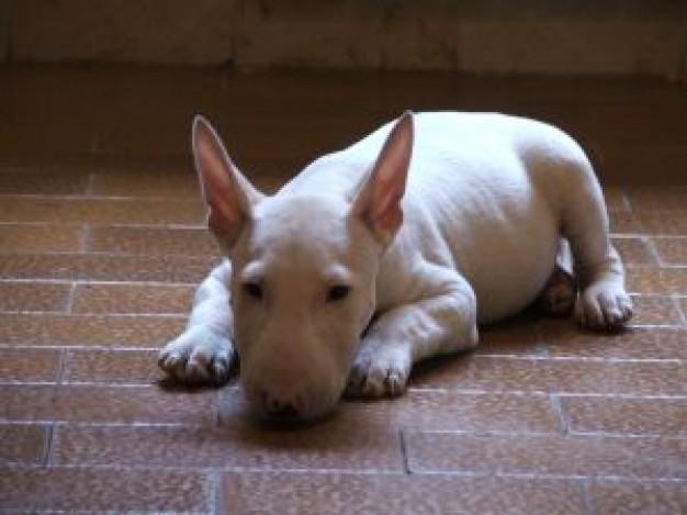 perierga.gr - Σκύλος κάνει τον πεθαμένο!