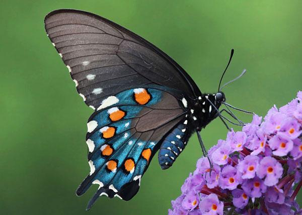 perierga.gr - Από κάμπια... πεταλούδα, σε απίθανες μεταμορφώσεις!