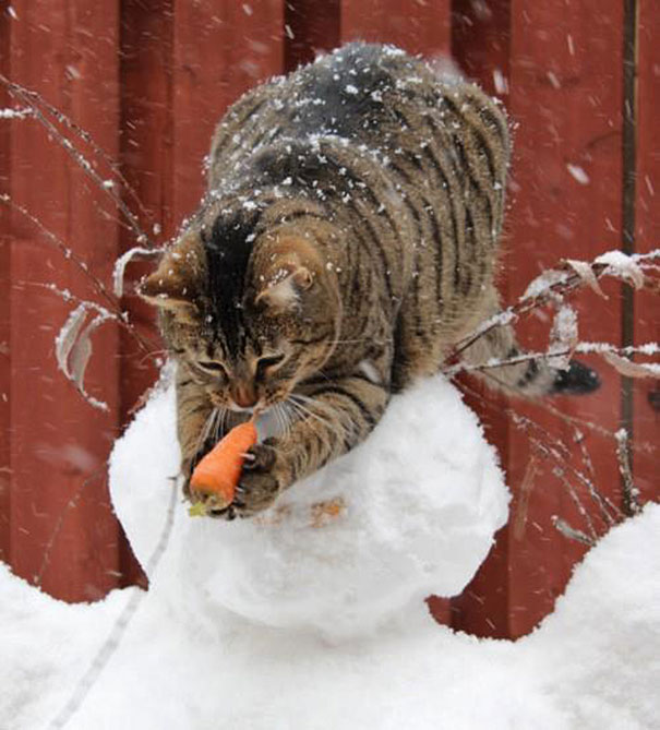 perierga.gr - Απίθανες γάτες, κλέφτες φαγητού!