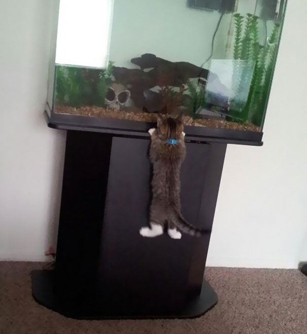 tilestwra.gr - Απίθανες γάτες, κλέφτες φαγητού!