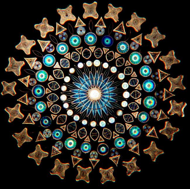 perierga.gr - Τα διάτομα αποκαλύπτουν την ομορφιά τους στο μικροσκόπιο!