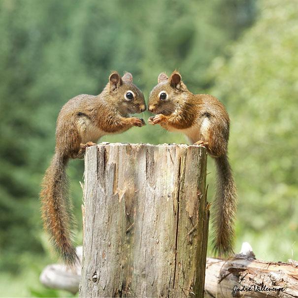 perierga.gr - Ζώα διδυμάκια ποζάρουν στο φακό!