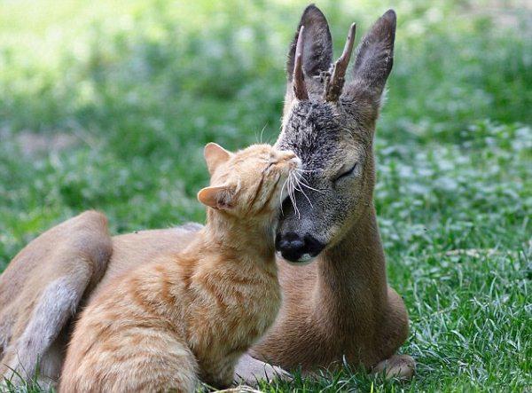 perierga.gr - Η διαφορετικότητα κάνει αυτά τα ζώα να αγαπιούνται περισσότερο!