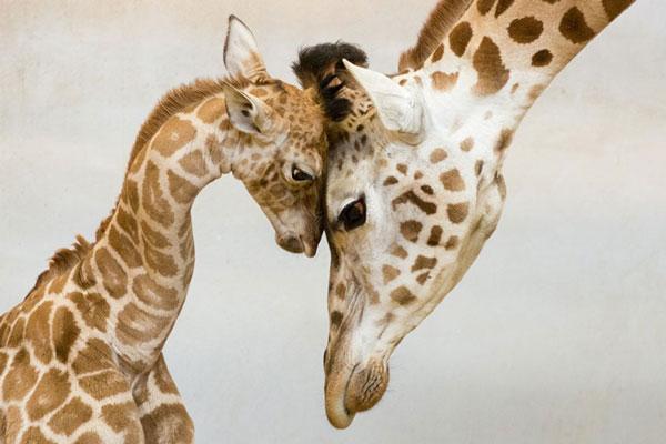 perierga.gr - Οικογενειακές φωτογραφίες ζώων!