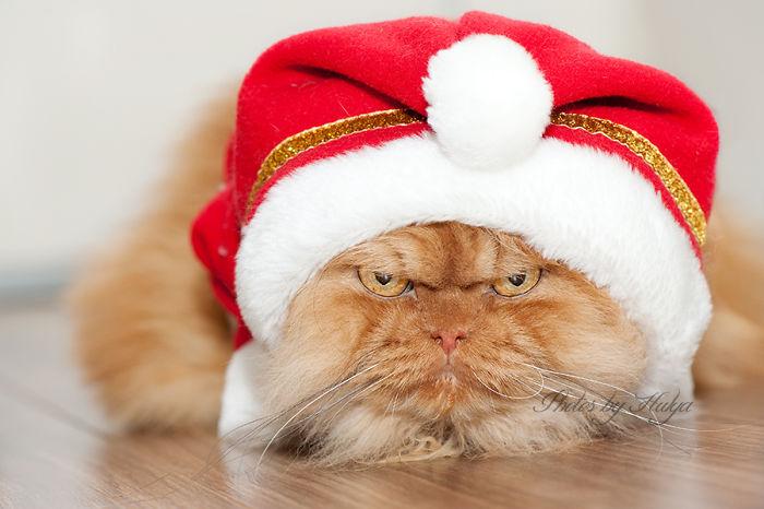 perierga.gr - Η πιο θυμωμένη γάτα στον κόσμο!