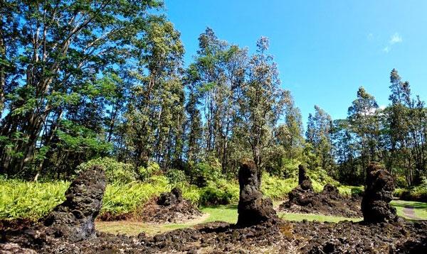 perierga.gr - Δέντρα λάβας στη Χαβάη!