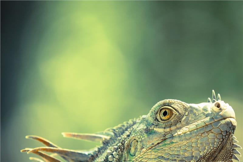 perierga.gr - «Άγρια Ζωή» σε εννέα βραβευμένες εικόνες!