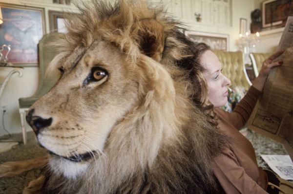 perierga.gr - Η ζωή μιας οικογένειας με ένα λιοντάρι!