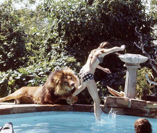 tilestwra.gr - Η ζωή μιας οικογένειας με ένα λιοντάρι!