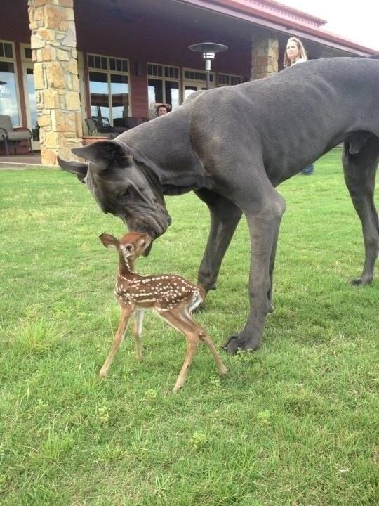 perierga.gr - Τα ζώα κάνουν τη ζωή μας ωραιότερη!
