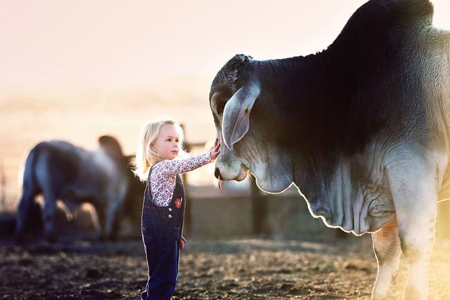perierga.gr - Ένα μικρό κορίτσι ανάμεσα στους ταύρους!