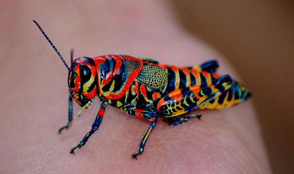 perierga.gr - Γνωστά ζώα με απρόσμενα χρώματα!