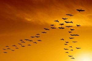 perierga.gr - Εντυπωσιάζει το συγχρονισμένο πέταγμα πουλιών!