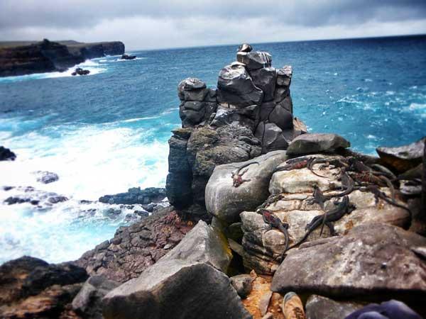 perierga.gr - Η εκπληκτική άγρια ζωή στα νησιά Γκαλαπάγκος