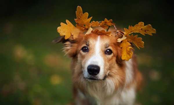 perierga.gr - Παιχνιδιάρικες φωτογραφίες σκύλων!