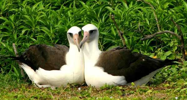 perierga.gr - Τα πιο ρομαντικά ζώα στη φύση!