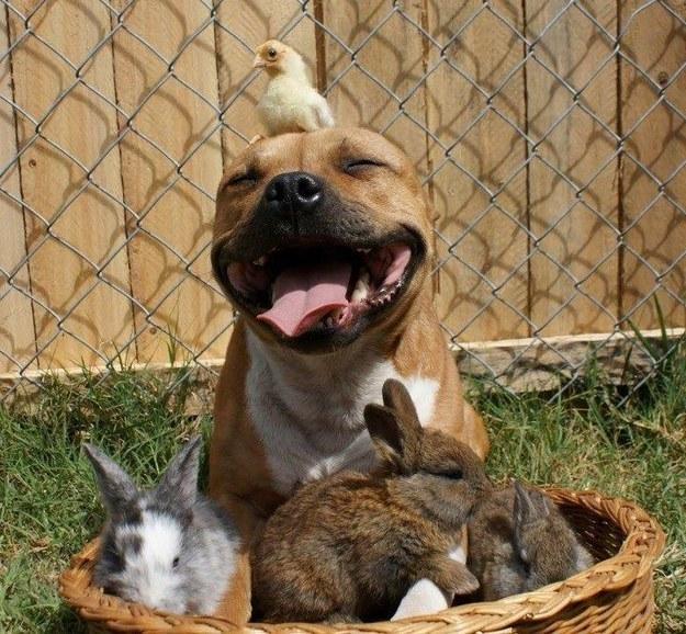 perierga.gr - Χαρούμενα & χαμογελαστά ζώα!