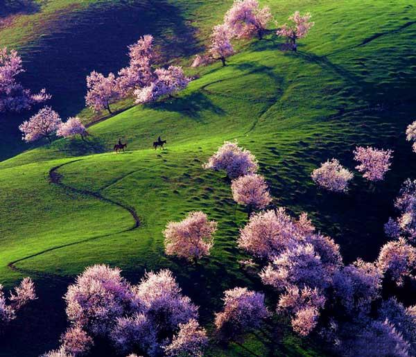 perierga.gr - Η απίστευτης ομορφιάς κοιλάδα με τις βερικοκιές στην Κίνα