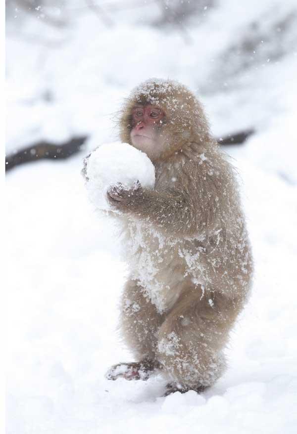 perierga.gr - Όμορφες εικόνες ζώων που περιβάλλονται από χιόνι!