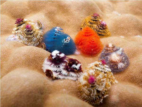 perierga.gr - Το χριστουγεννιάτικο δεντράκι της θάλασσας!
